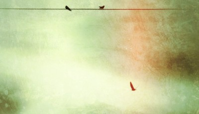 iPhoneography - birds on wire