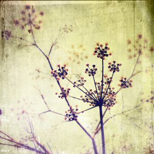Fennel iPhoneography - Blender Layer