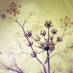 Fennel - PicFX Filters
