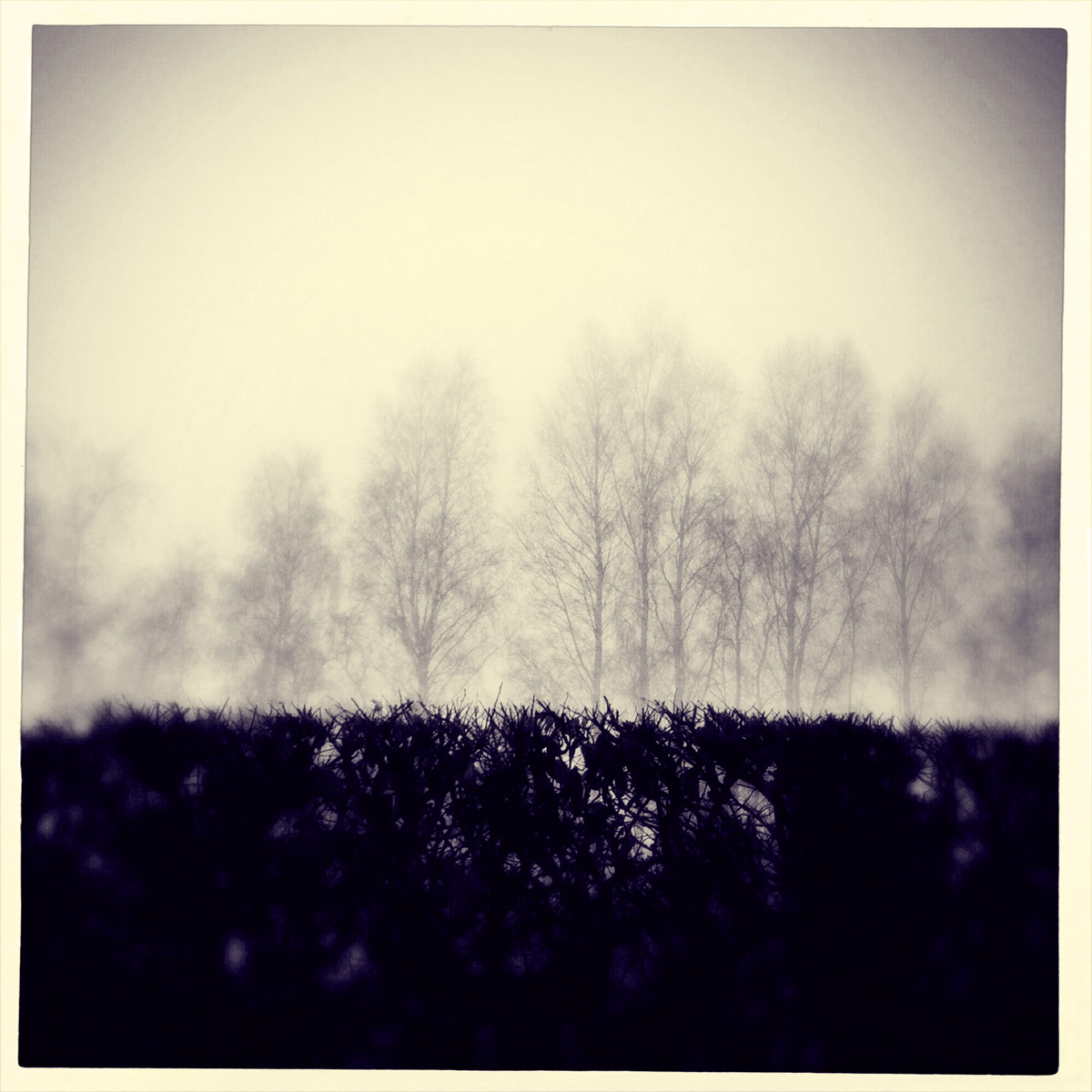 iphoneography fog hedge trees