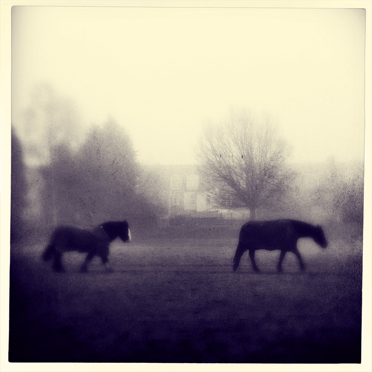 iphoneography - two horses