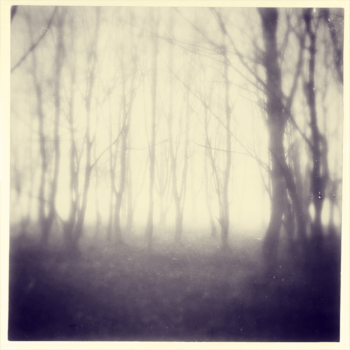 iphoneography - foggy trees