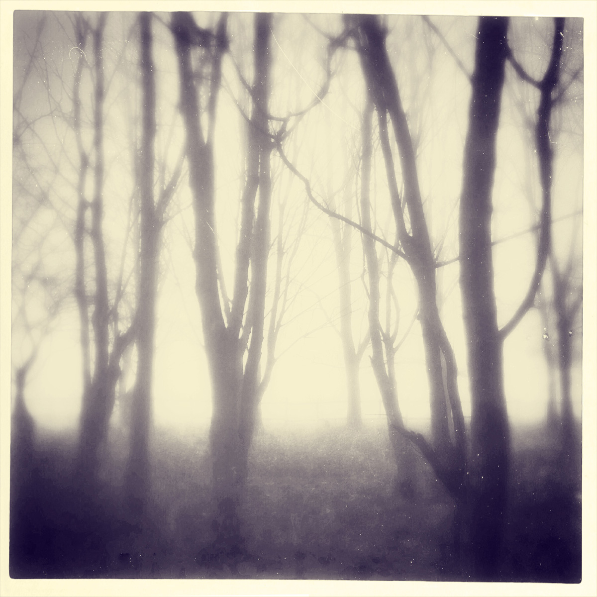 iphoneography - foggy trees 4