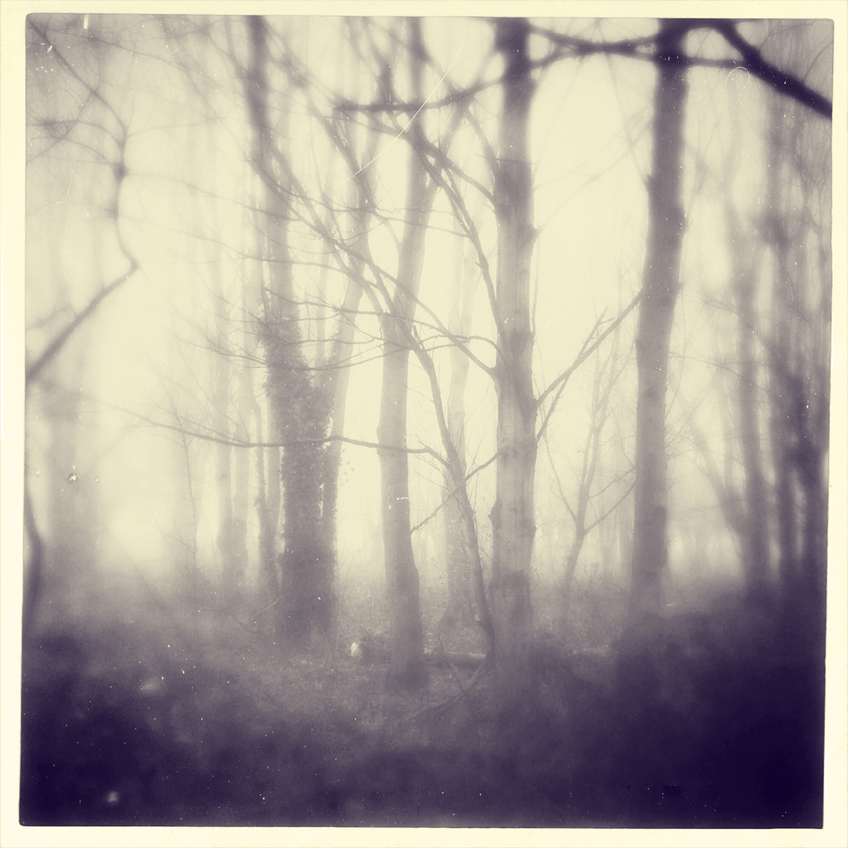 iphoneography - foggy trees 3