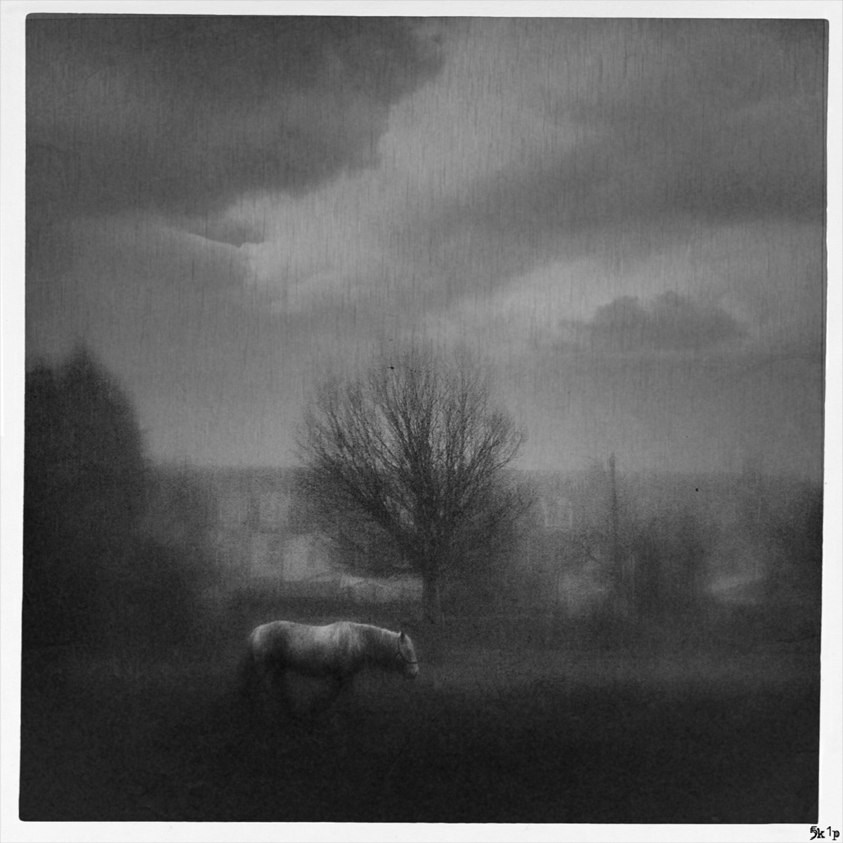 iphoneography - horse on lincoln west common