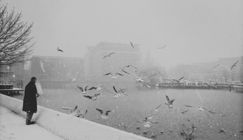 feeding the birds in winter at lincoln brayford
