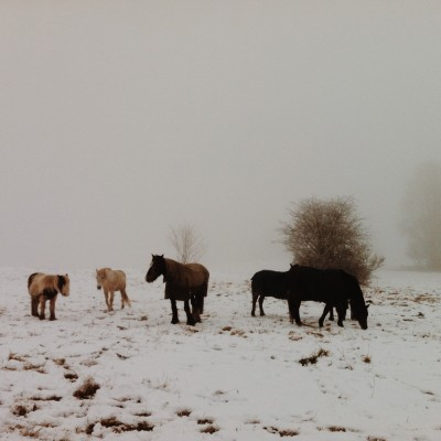winter horses on lincoln west common