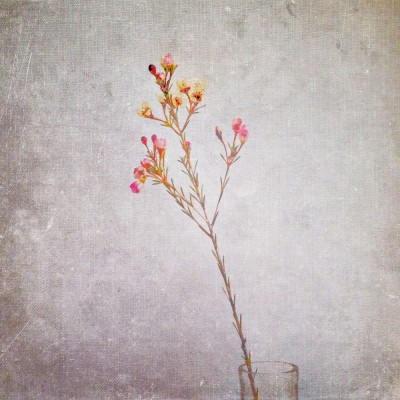 iphone photography - bleached by the sun
