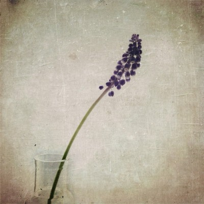 muscari textured floral - iPhoneography