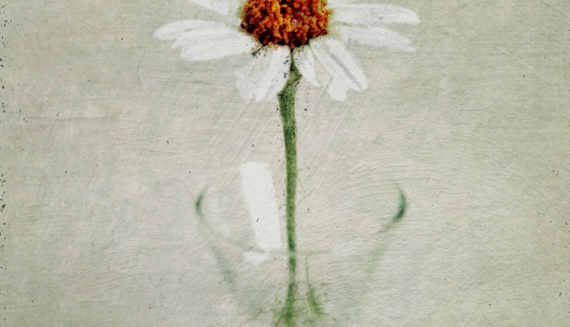 painterly floral iPhone photography tutorial