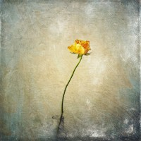 stackables - yellow rose